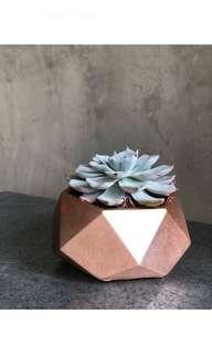 Hexagon Concrete Planter