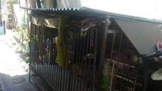 Dog cage 5x3 ft