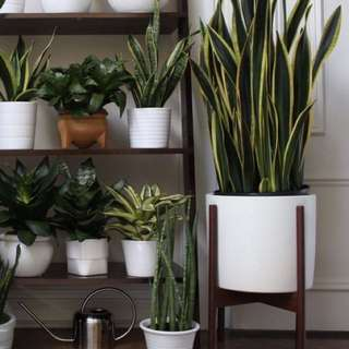 White pot for plants