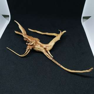 Special Offer: Driftwood S4/ Mini/ Drift wood/ Aquarium/ Airplant
