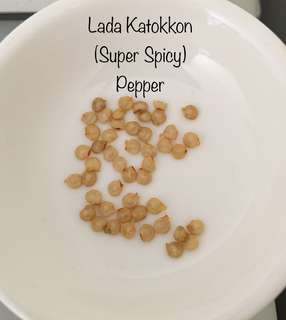 Lada Katokkon (Super Spicy) Pepper