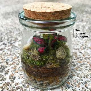 Glass Bottle Terrarium (7cm x 6cm)