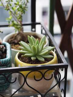 Assorted Homegrown Succulent