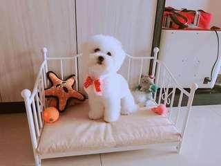 高級寵物床