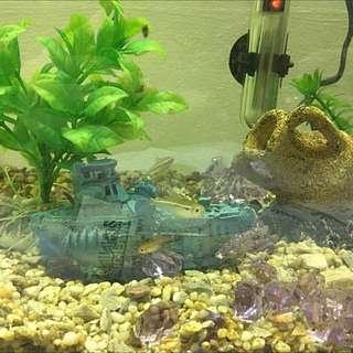 Fish Tank Set Up With Fish