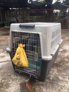 Mobile kennel / 運輸籠