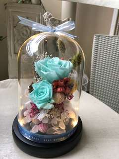 Preserved roses in a jar! Buy for your gf or mummy!