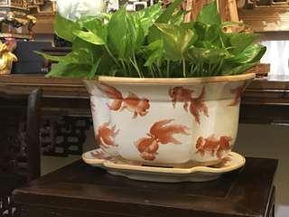 Goldfish porcelain pot