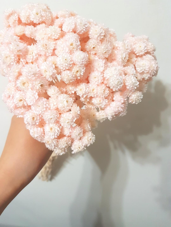 乾燥花 花束 蠟菊 粉 不凋花 花材
