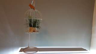 Airplant in birdcage candle stand - Funkiana & Tillandsia Ionantha