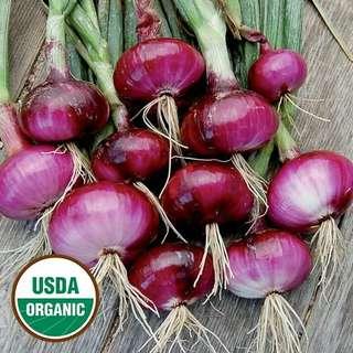 Gardening ♡ Red Wethersfield (Organic) Seeds X 50