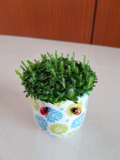 Happy Plant for office !