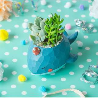 Succulents in Wondrous Willy Blue Whale Planter