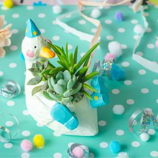 Succulents in Dazzling Duffy Duck Planter
