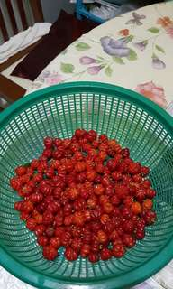 cherry seed for sales