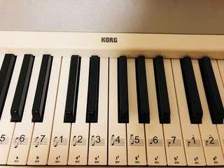 KORG 電子鋼琴🎹可拆
