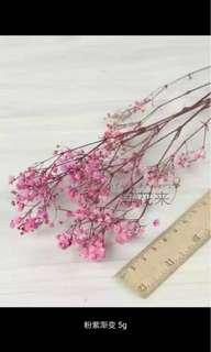永生花 Eternal Flower (5g)