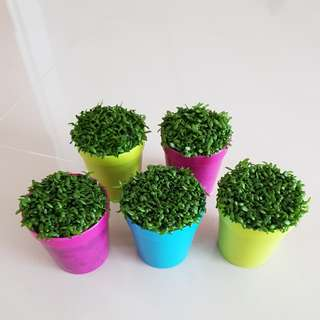Pre order Happy Plant for office & farewell gift!