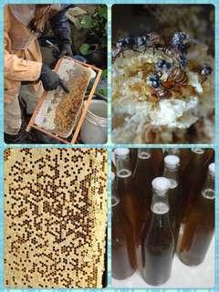 自家養蜜蜂🐝 荔枝蜜 龍眼蜜