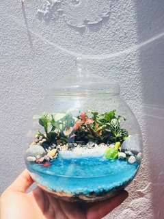 Terrarium: Turtle by the Shore