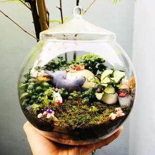 Terrarium: Totoro & Mei