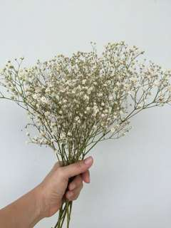 Dried Baby breath