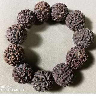 11 pcs of  Natural Java Rondelles 7-Mukhi-Rudraksha-Seven face Rudraksh Bracelet 22 mm
