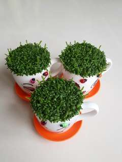 Happy Plant For Office & Gift! (OFFER)