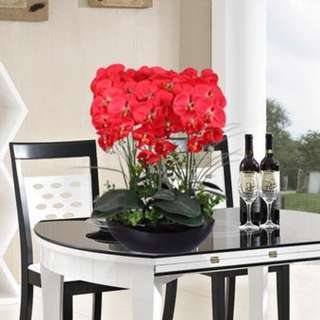 living room potted decoration flowers seeds