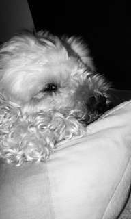 Pics of my doggie sleeping lol