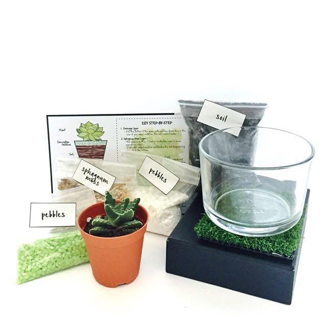 Basic Diy Terrarium Kit Gardening On Carousell