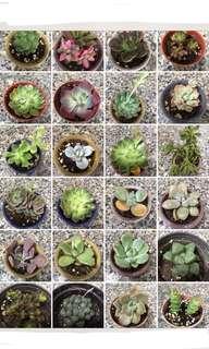 Rare Succulents