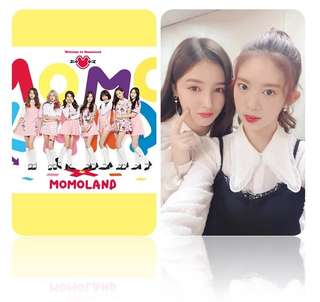 (Po) Momoland Photocards