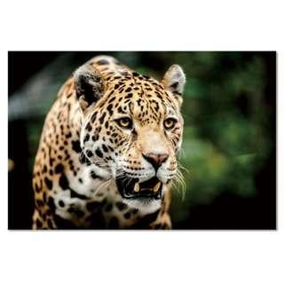 Jaguar Acrylic Print 1 Piece