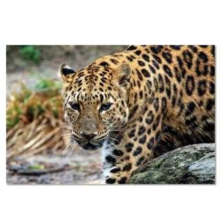Leopard Acrylic Print 1 Piece