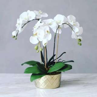 Luxe Series Artificial Orchid