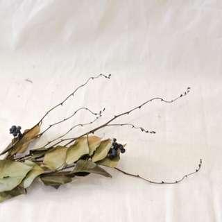 intellect strain dry flowers