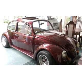 VW Beetle cat mulus