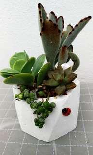 Succulents decor