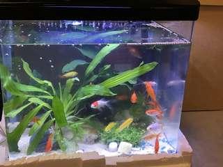 90% New LED Fish tank 九成新LED藍燈新魚缸含過濾水泵(送換水水泵,魚糧和過濾綿)