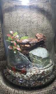 Crabby Terrarium