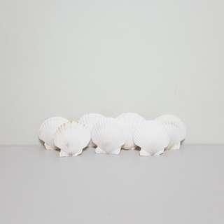 [For Rent] 7 White Seashell SS021