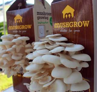 Grow Organic Mushroom (D.I.Y.)