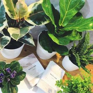 INDOOR Houseplants (All potted in beautiful waterproof pots meant for indoor gardening #BRINGNATUREIN)😍