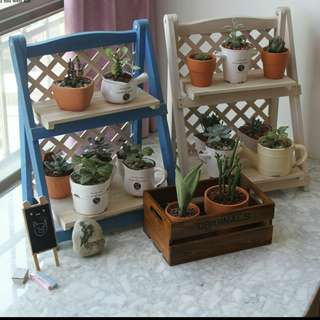 Succulent wooden plant rack / 2 Tier