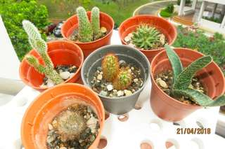 Young cactus succulent for beginners easy high rise gardening