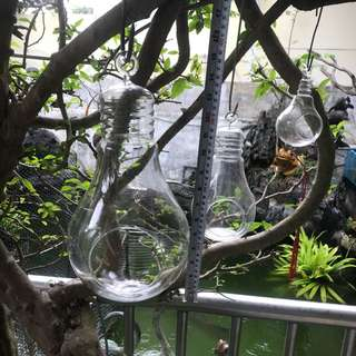 Hanging glass pot for air plant 3 nos