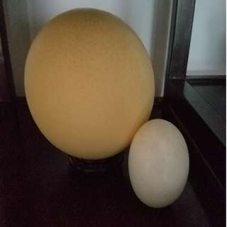Ostrich Egg Shell (empty) + snake Egg shell (empty)