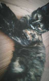 DLH Cat For Adoption