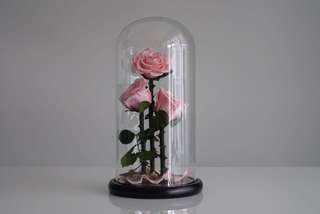 Premium Preserved 3-Piece Ecuadorian Roses in Glass Dome